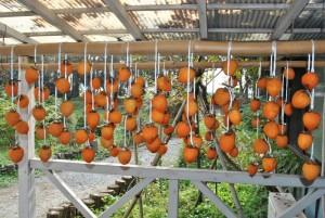 干し柿 ①