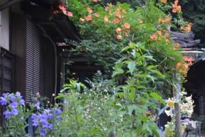 今盛りの花々