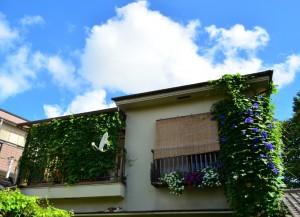 夏空と緑のカーテン