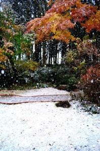 薄っすらと雪化粧した庭