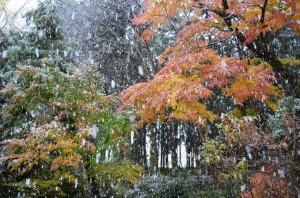 激しく降る初雪②