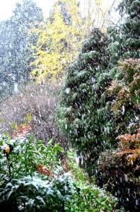 激しく降る初雪①