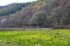 沼の原湿原①