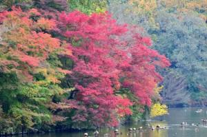 井頭公園・紅葉④