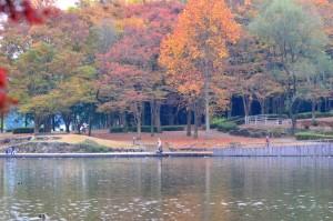 井頭公園・紅葉⑤