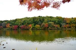 井頭公園・紅葉②